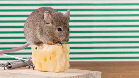 The Only Free Cheese is in the Mouse Trap: Inheritance Scams
